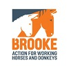 The Brooke Hospital for Animals
